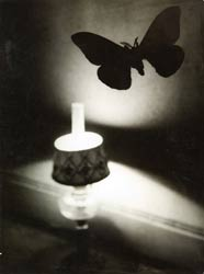 © Succession Brassaï  - Papillon de nuit - collection particulière